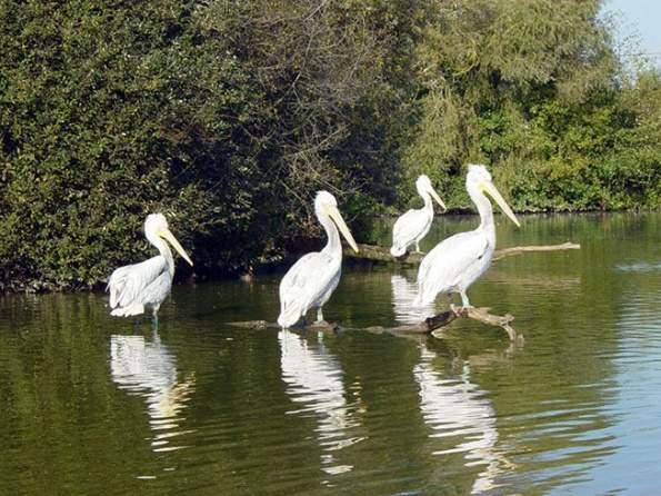 """Великолепный Парк птиц расположен в регионе Домб (Dombes), также именуемом  """"регион тысячи прудов """"."""