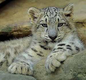 Стамбульский зоопарк
